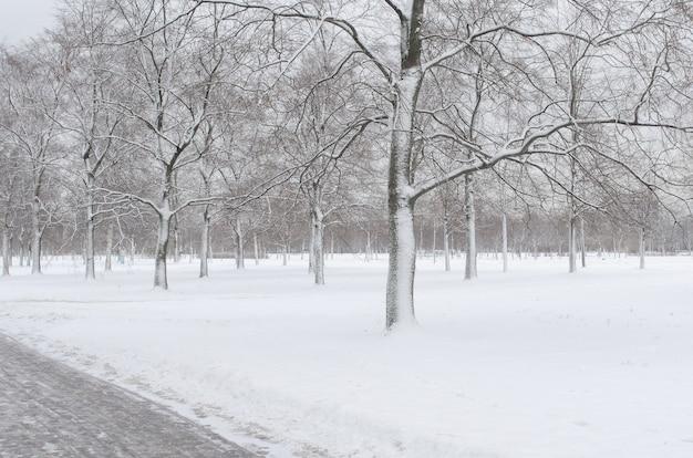 Bomen in de sneeuw in het park in de winter. Premium Foto