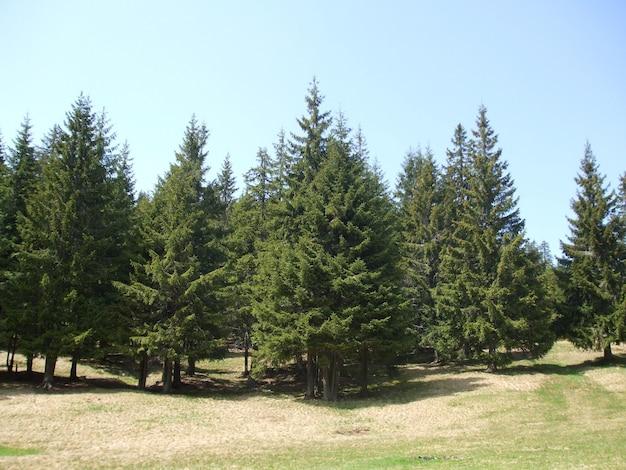 Bomen in het bos groeien op een groen veld Gratis Foto
