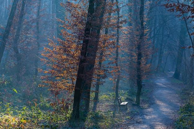 Bomen in het sombere bos in maksimir, zagreb, kroatië Gratis Foto