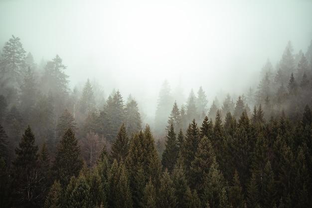 Bomen naast elkaar in het bos onder de sluipende mist Gratis Foto
