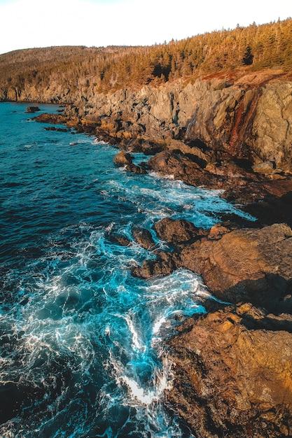 Bomen op rotsen met golven van de zee Gratis Foto