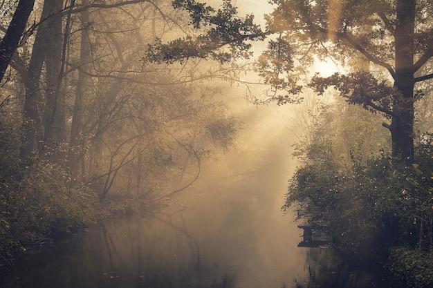 Bomen tijdens gouden uur Gratis Foto