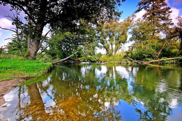 Bomen weerspiegeld in het water Gratis Foto