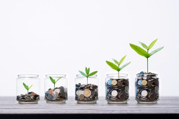 Boom en jong boompje het groeien frome muntstukkengeld in glas die van kruik op houten lijst, en financiënconcept toenemen toenemen Premium Foto