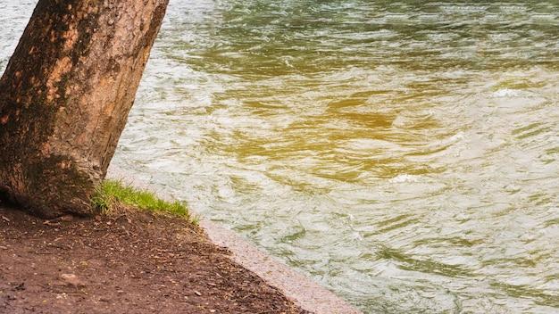 Boom groeien door water Gratis Foto