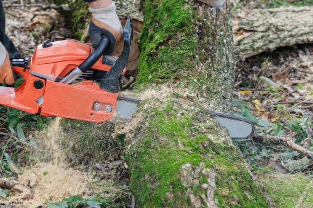 Boom kappen met een grote kettingzaag die in een boomstam snijdt bewegingsonscherpte van zaagsel en steenslag een ontwortelde gebroken boom, verscheurd door de wind tijdens een hevige storm Premium Foto