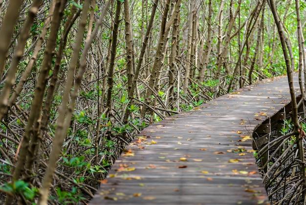 Boomtunnel, houten brug in mangrovebos Premium Foto
