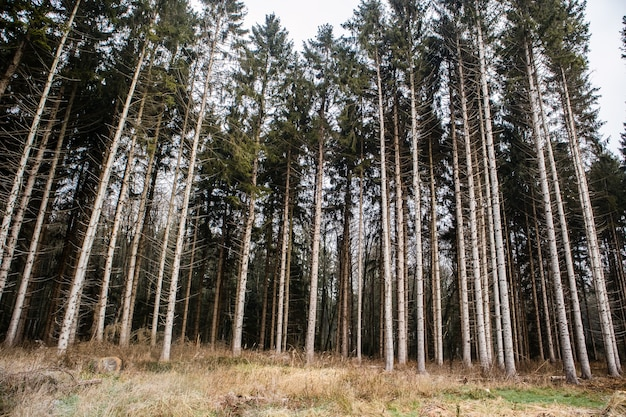 Bos bedekt met het gras omgeven door hoge bomen onder een bewolkte hemel Gratis Foto