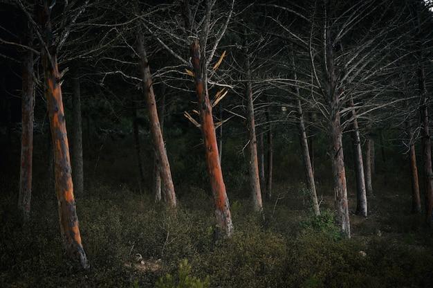 Bos bedekt met struiken en bomen tijdens de nacht Gratis Foto