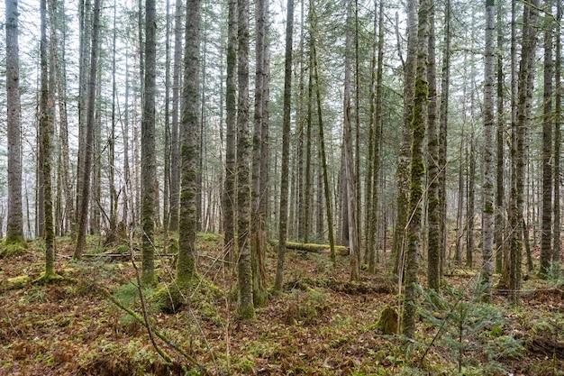 Bos gestructureerde achtergrond van bomen en land in het vroege voorjaar met zonneschijn Premium Foto