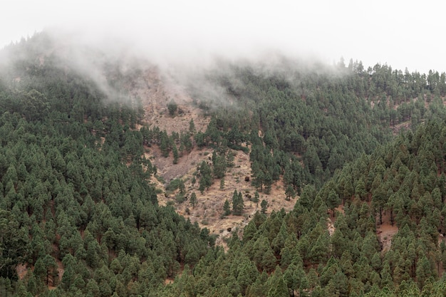 Bos groeit op bergkust Gratis Foto