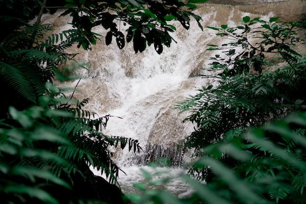 Bos met waterval achtergrond. Premium Foto