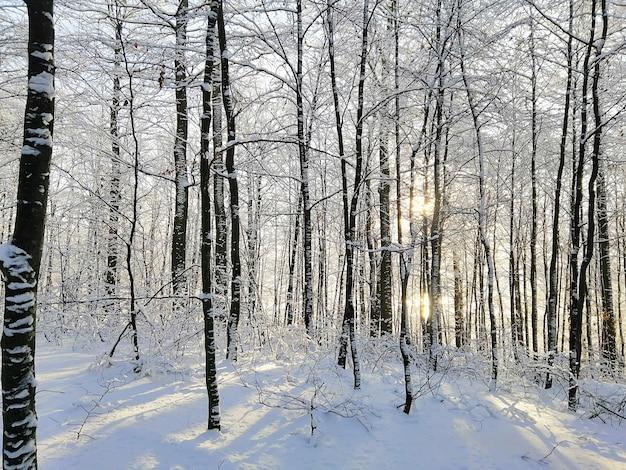 Bos omgeven door bomen bedekt met de sneeuw onder het zonlicht in larvik in noorwegen Gratis Foto