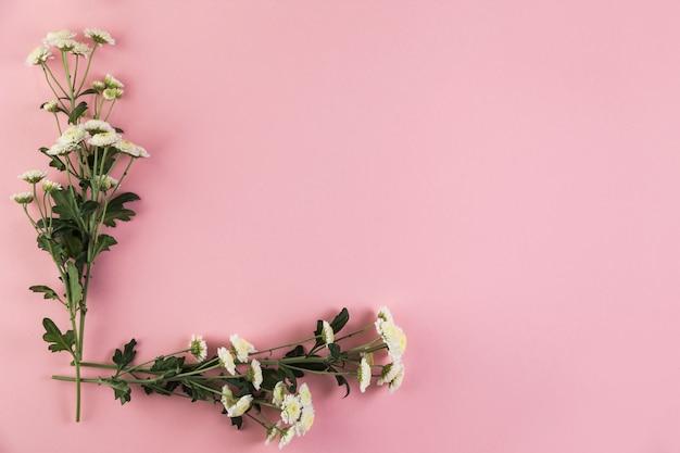 Bos van chrysanthemum bloemen op roze achtergrond Gratis Foto