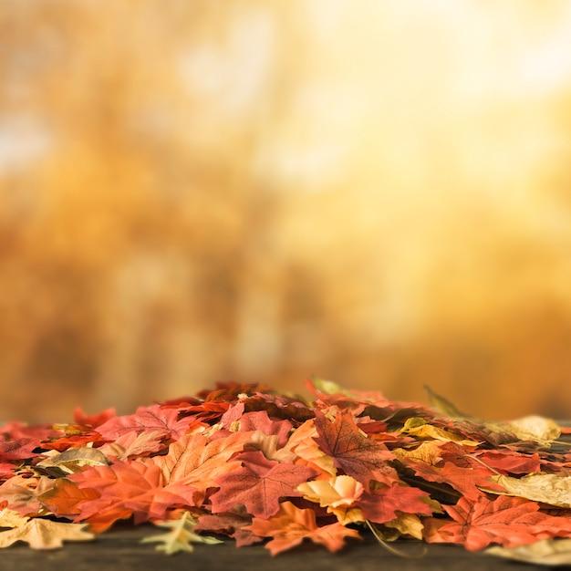 Bos van gekleurde bladeren die op grond liggen Gratis Foto