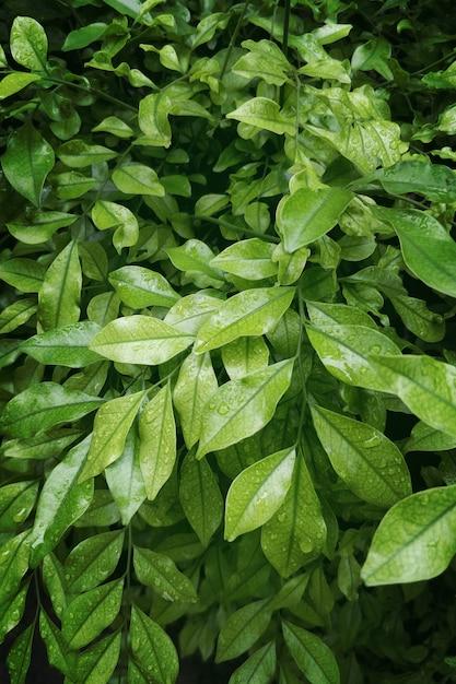 Bos van groene natuurlijke bladerenachtergrond Gratis Foto