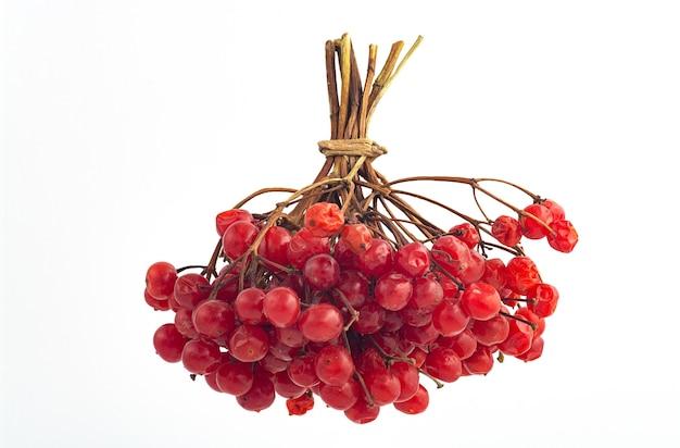 Bos van rode gerijpte bessen van viburnum Premium Foto