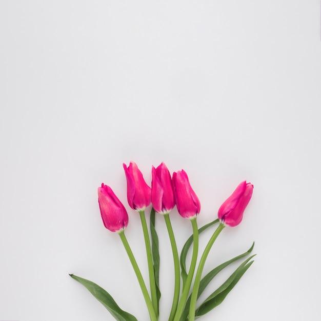 Bos van roze bloemen op groene stengels Gratis Foto