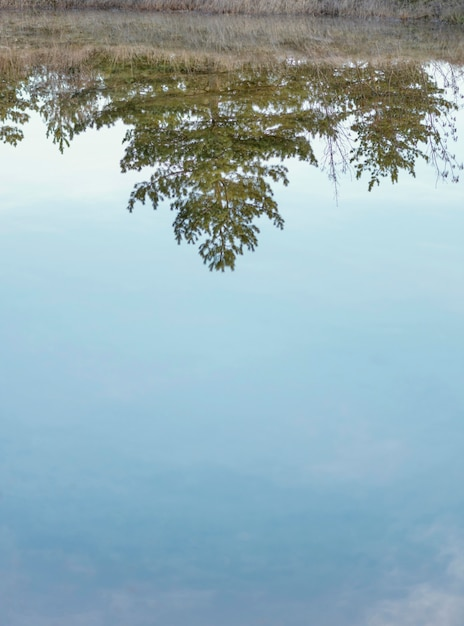 Bos weerspiegeld in water meer Gratis Foto