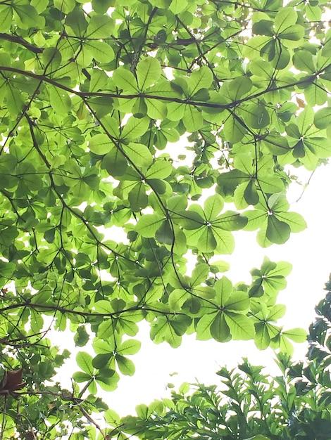 Bosbomen. natuur groen hout zonlicht achtergronden. zachte toon Gratis Foto