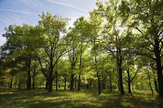 Bosje in de zomer Gratis Foto