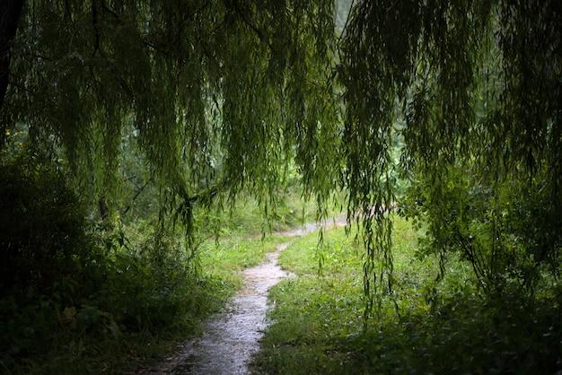 Boslandschap met een wilg in de regen Premium Foto