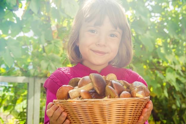 Bospaddestoelen in de handen van een kind. selectieve aandacht. Premium Foto