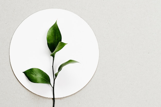 Bovenaanzicht bladeren op witte cirkel Gratis Foto