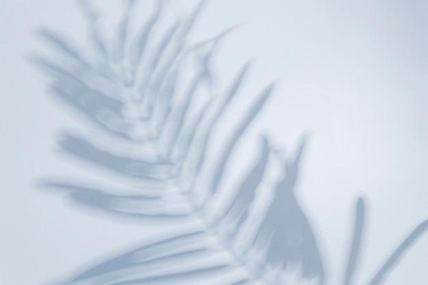 Bovenaanzicht bleke schaduw van een blad Gratis Foto