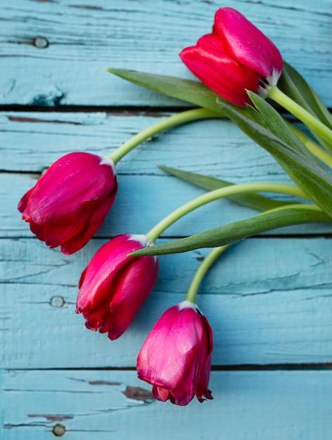 Bovenaanzicht bloeiende tulpen Gratis Foto