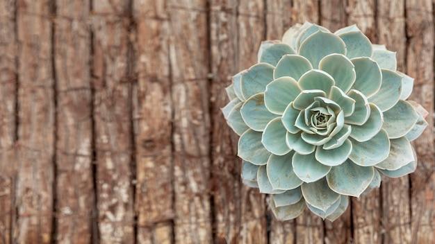 Bovenaanzicht bloem op houten achtergrond Gratis Foto