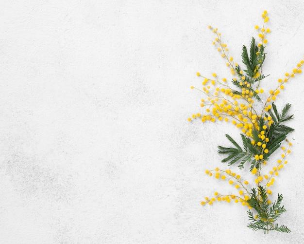 Bovenaanzicht bloemen met kopie-ruimte Gratis Foto