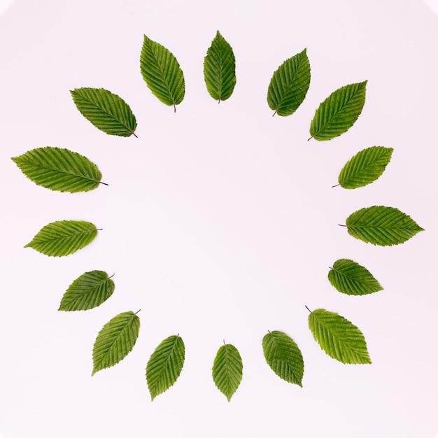 Bovenaanzicht cirkel van bladeren met kopie ruimte Gratis Foto