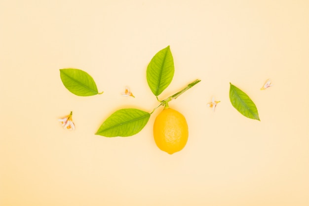 Bovenaanzicht citroen met bladeren Gratis Foto