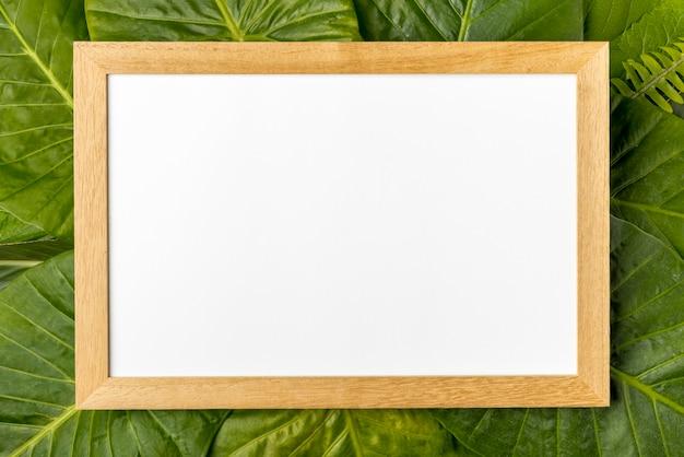 Bovenaanzicht collectie van groene bladeren concept Gratis Foto