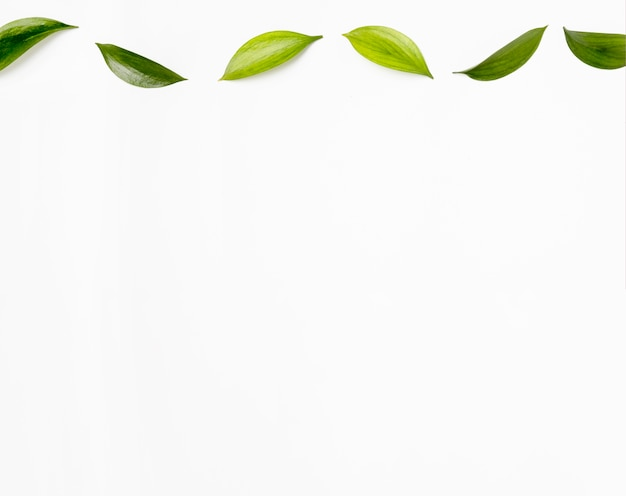 Bovenaanzicht collectie van groene bladeren met kopie ruimte Gratis Foto