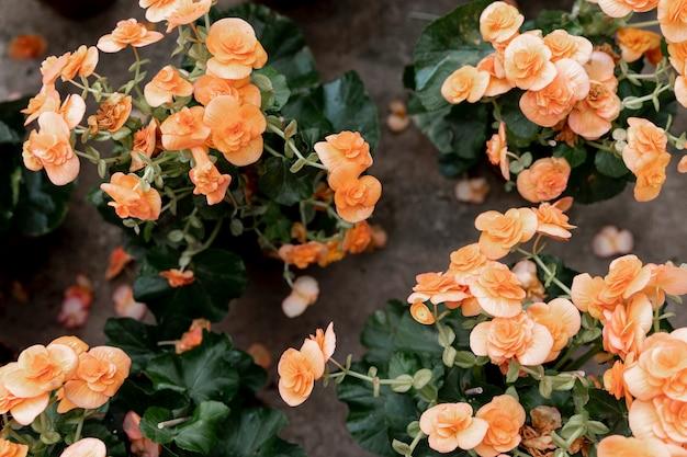 Bovenaanzicht decoratie met oranje bloemen Gratis Foto