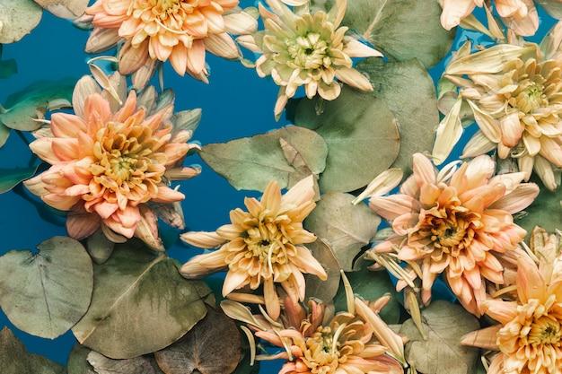 Bovenaanzicht delicate bloemen in blauw water Gratis Foto