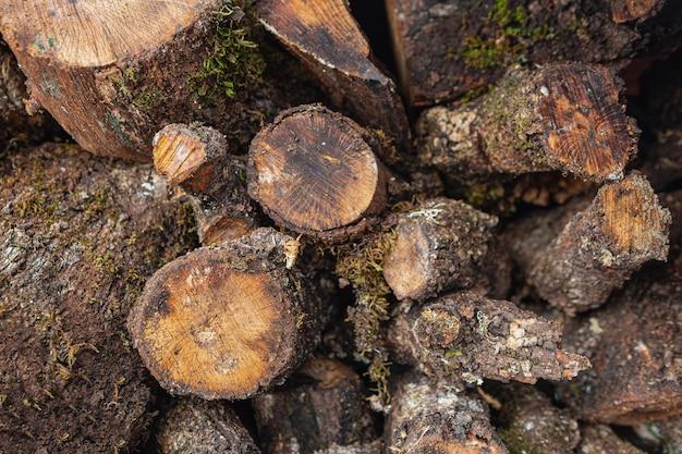 Bovenaanzicht droog hout Gratis Foto