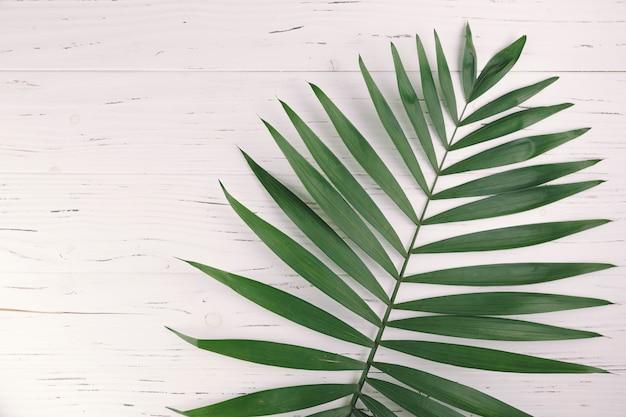 Bovenaanzicht exotische bladeren Gratis Foto