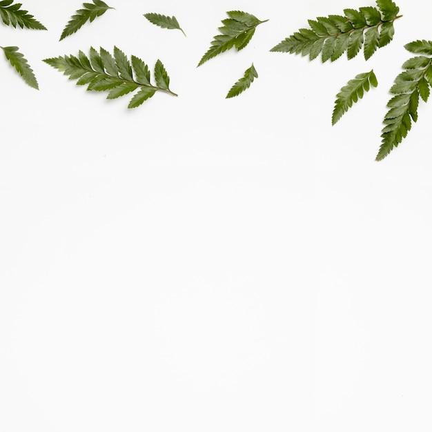 Bovenaanzicht groene bladeren met kopie ruimte Gratis Foto