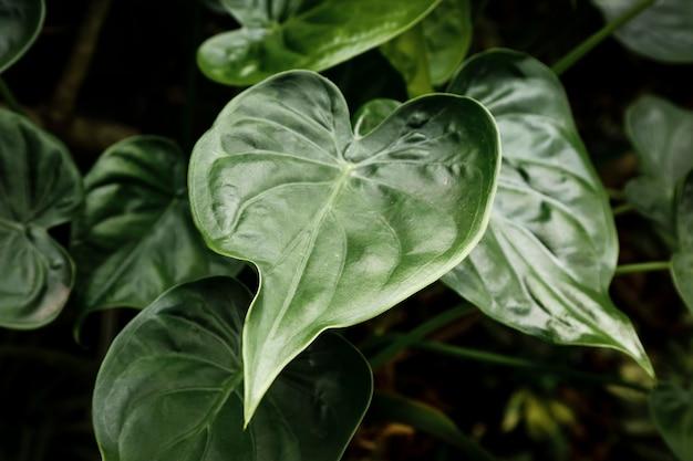 Bovenaanzicht groene bladeren met onscherpe achtergrond Gratis Foto
