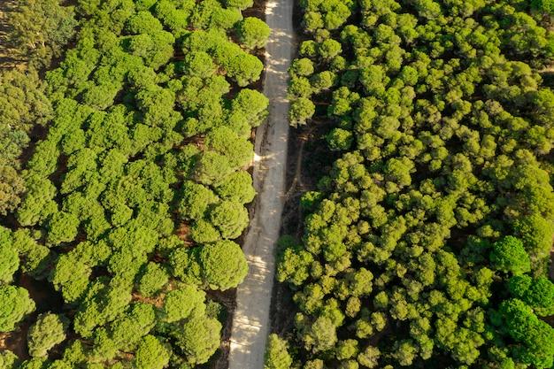 Bovenaanzicht groene bos en weg genomen door drone Gratis Foto