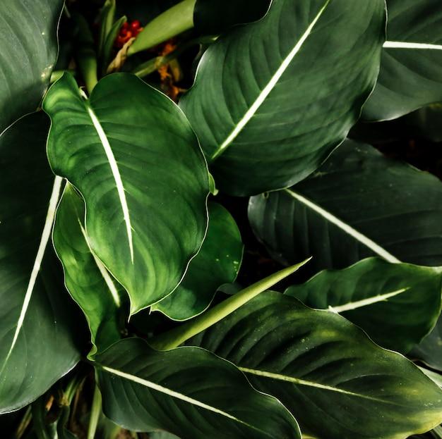 Bovenaanzicht groene tropische bladeren Gratis Foto