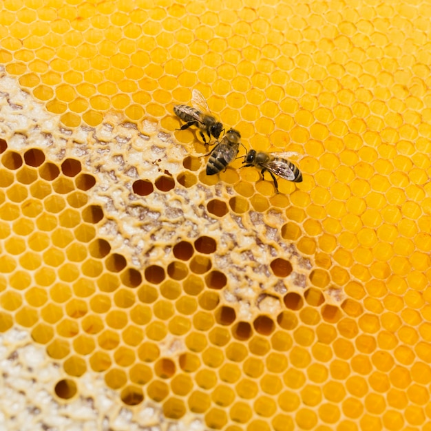 Bovenaanzicht honingraat met bijen Gratis Foto
