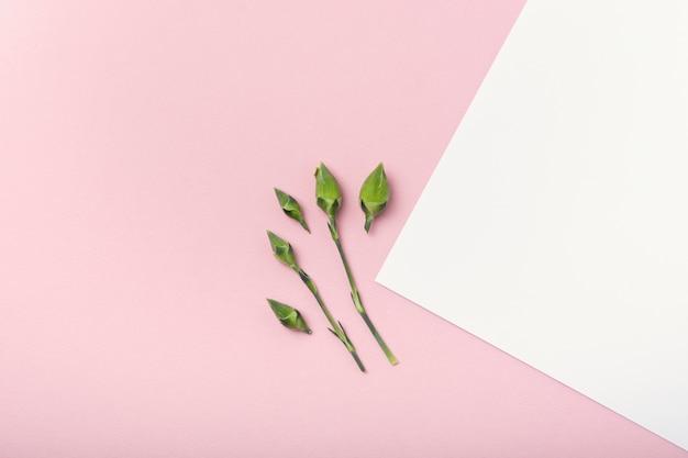 Bovenaanzicht kleine bloemknoppen op witte en roze kopie ruimte achtergrond Gratis Foto