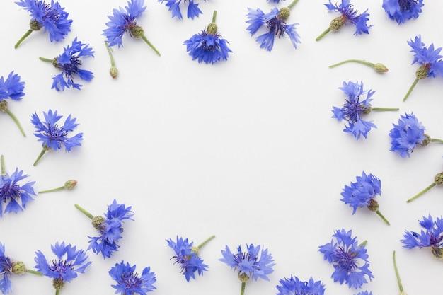 Bovenaanzicht korenbloemen frame Gratis Foto