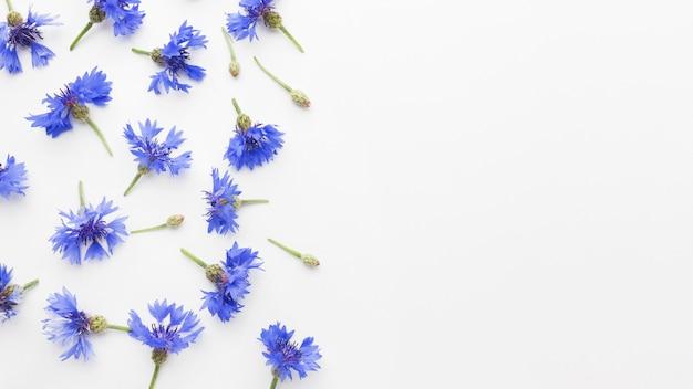 Bovenaanzicht korenbloemen met kopie ruimte Gratis Foto