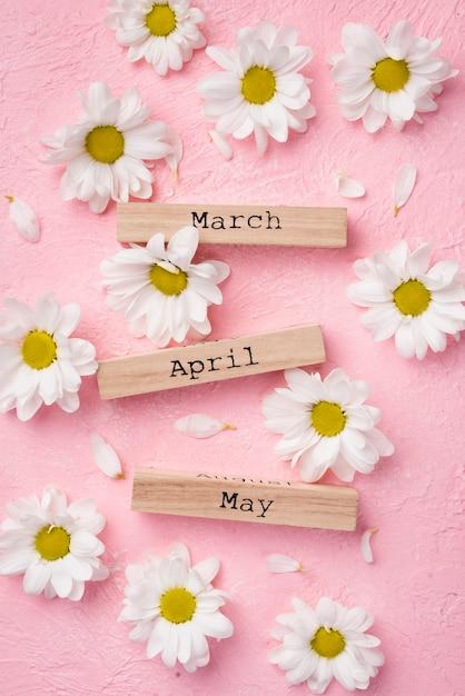 Bovenaanzicht margrieten met lente maanden tags Gratis Foto
