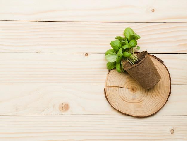 Bovenaanzicht plant op houten tafel Gratis Foto